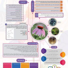 نمونه کار طراحی پوستر علمی با موضوع گیاهان دارویی